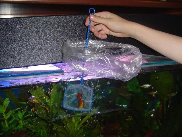 cambiar agua para acuario