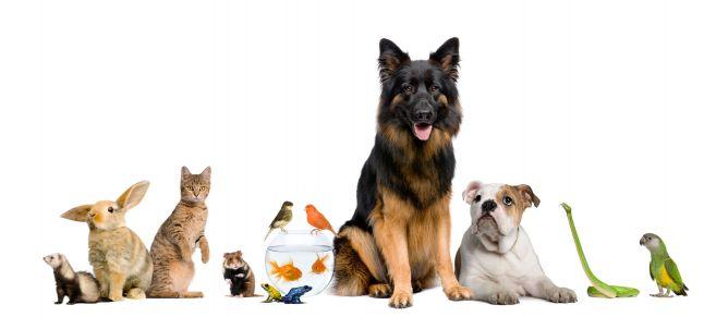 El mejor agua para tus mascotas