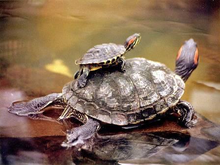 La mejor agua para las tortugas