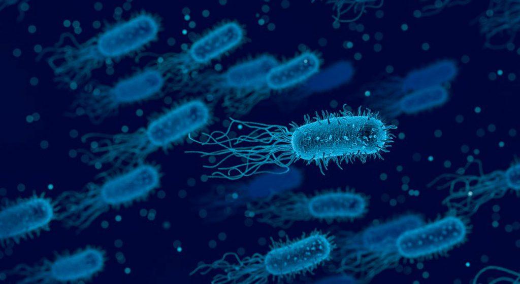 Bacterias en el agua