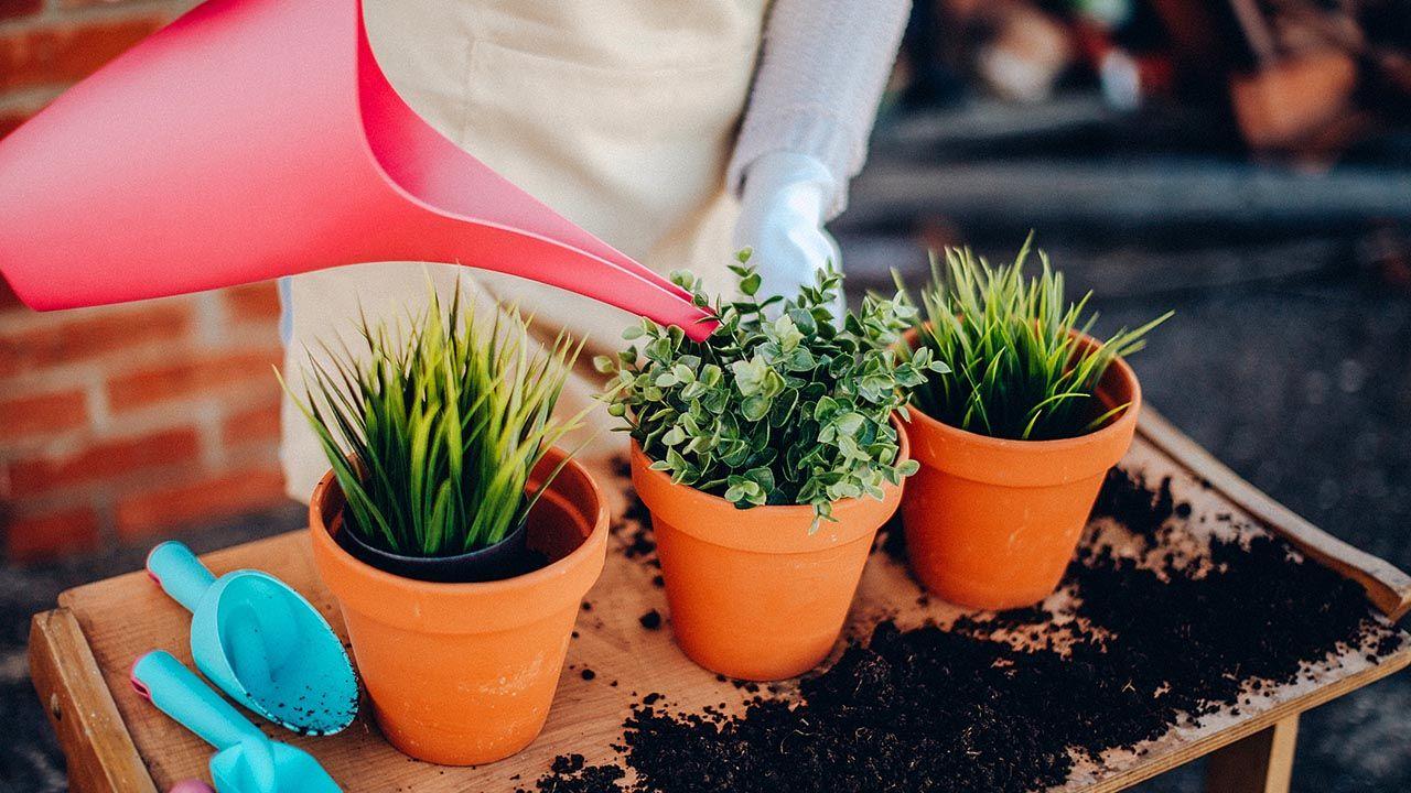 Regar las plantas con agua osmotizada